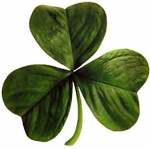 Three-leafed clover